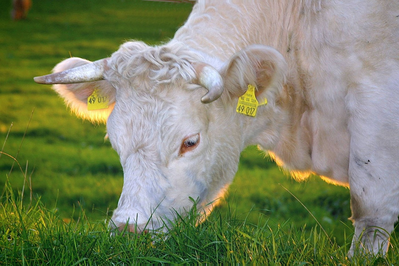 Dairy Farming is a Biological System,  cow firming is best way to get benefit