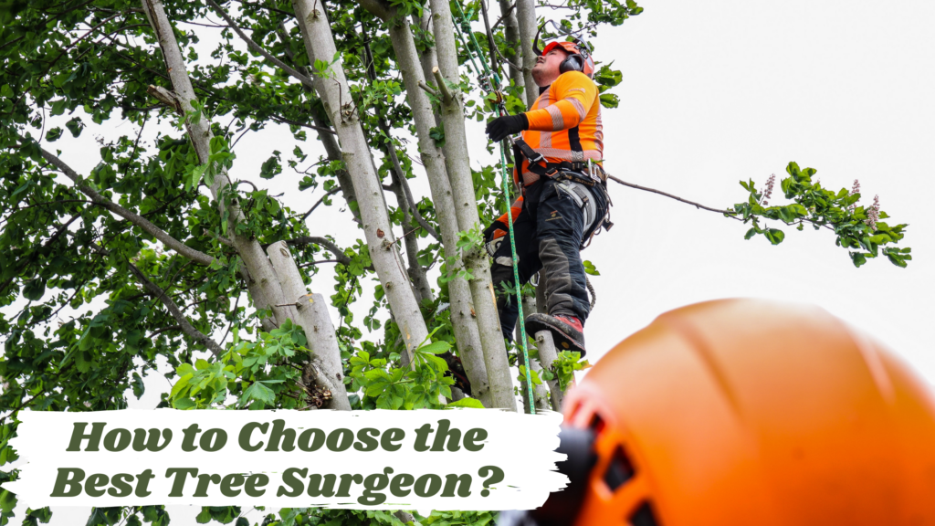How to Choose the Best Tree Surgeon?